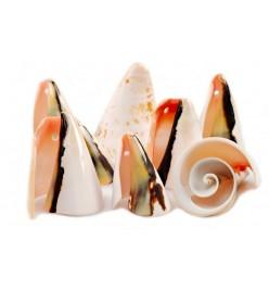 Muszle spiralne cięte 3-5cm